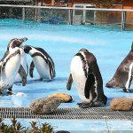 埼玉こども動物自然公園の混雑状況やおさえておきたいポイント